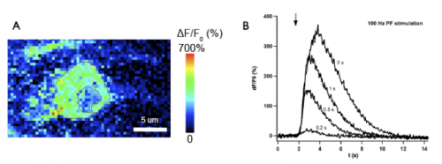 2 photon measurements of the somatic calcium rises reported by GCaMP3 in a cerebellar interneuron following stimulation of parallel fibers in vivo